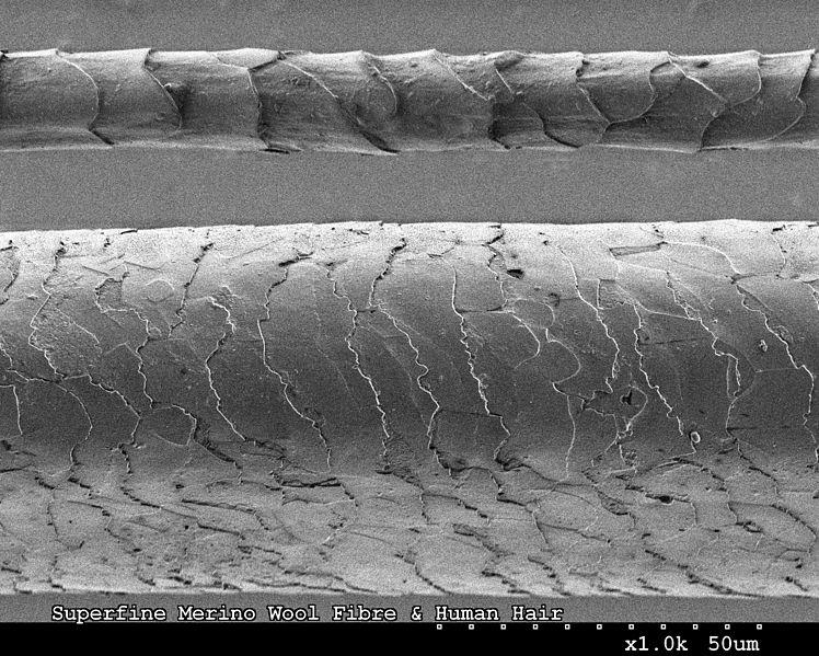 Porównanie grubości ludzkiego włosa i włosa merynosa