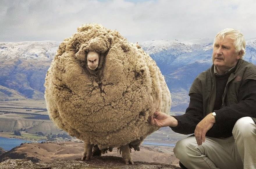 Z czego i jak robi się najlepsze swetry?